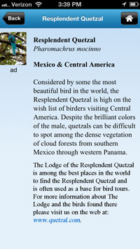 quetzal description